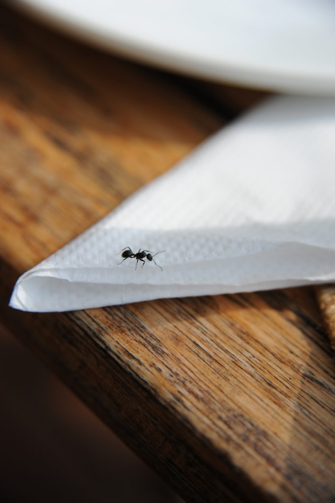 an ant walking on a white paper napkin