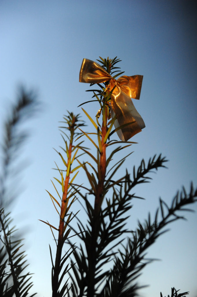 gold bow on a christmas tree top outside