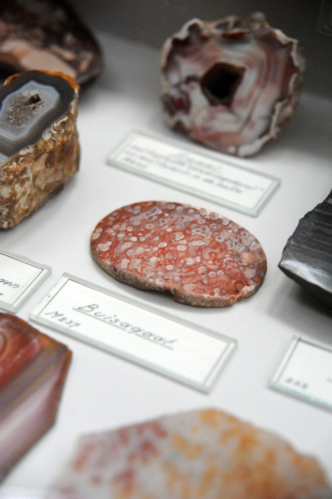 samples of stone in the museum, this slice looks like a piece of salami