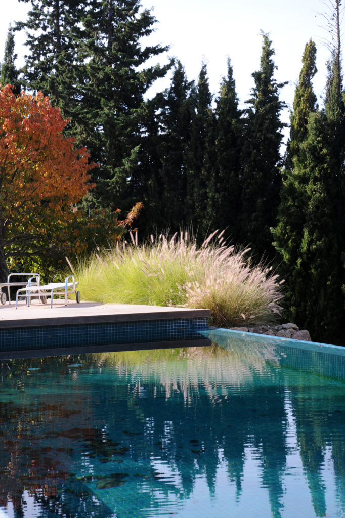 blue swimming pool surrounded by trees