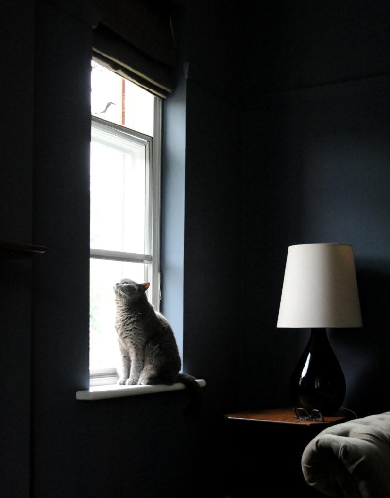 grey cat sitting on window sill